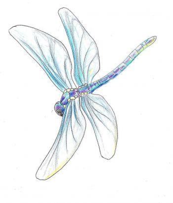 dragonfly free tattoo
