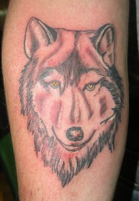 Wolf Head Picture Tattoo On Arm