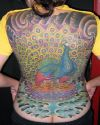 peacock pic tattoo on full back