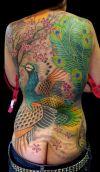 peacock tattoo pics on full back