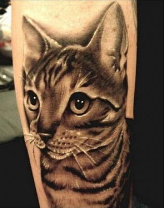 Cat Pics Tattoo