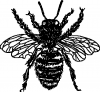 bee free pic tattoo