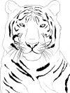 tiger free tattoos