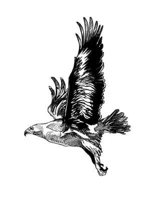 Birds tattoos, Eagle tattoos, Tattoos of Birds, Tattoos of Eagle, Birds tats, Eagle tats, Birds free tattoo designs, Eagle free tattoo designs, Birds tattoos picture, Eagle tattoos picture, Birds pictures tattoos, Eagle pictures tattoos, Birds free tattoos, Eagle free tattoos, Birds tattoo, Eagle tattoo, Birds tattoos idea, Eagle tattoos idea, Birds tattoo ideas, Eagle tattoo ideas, flying eagle free tattoos