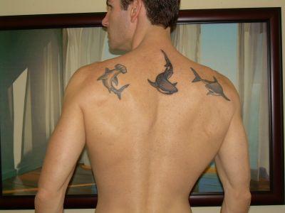 Fish tattoos, Shark tattoos, Tattoos of Fish, Tattoos of Shark, Fish tats, Shark tats, Fish free tattoo designs, Shark free tattoo designs, Fish tattoos picture, Shark tattoos picture, Fish pictures tattoos, Shark pictures tattoos, Fish free tattoos, Shark free tattoos, Fish tattoo, Shark tattoo, Fish tattoos idea, Shark tattoos idea, Fish tattoo ideas, Shark tattoo ideas, Shark tattoo pics gallery